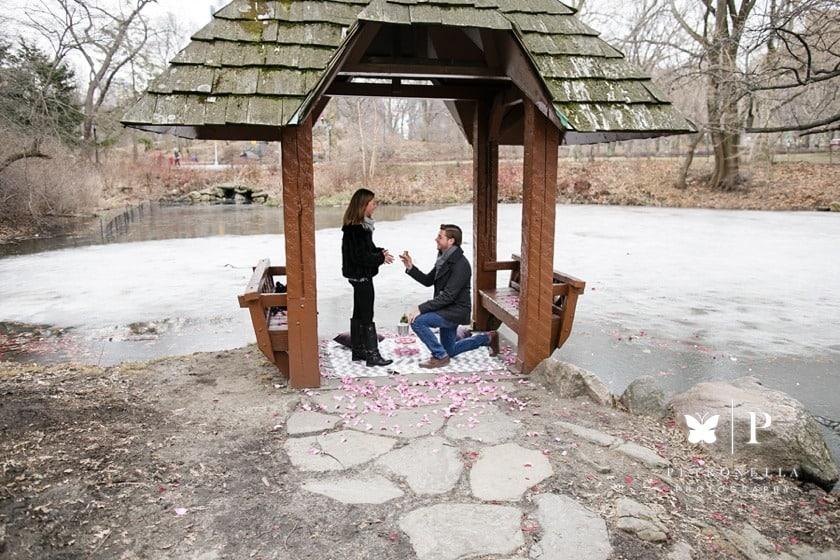 Central-Park-Surprise-Marriage-Proposal.jpg